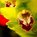 aphoto de fleur