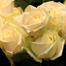 photo de fleur